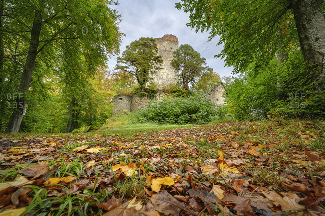 Germany- Baden-Wurttemberg- Bodman-Ludwigshafen- Fallen leaves lying on ground in autumn with ruins of Burg Altbodman standing in background