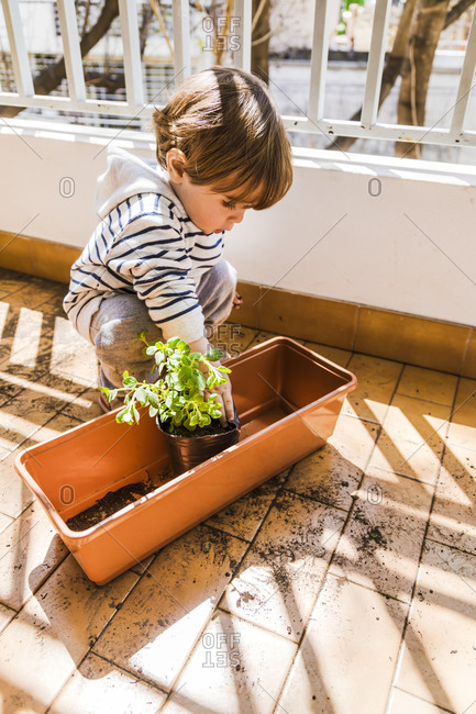 Cute boy playing with oregano plant mud while crouching at balcony