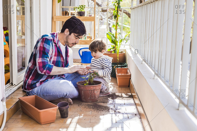 Man and boy planting strawberry plant in pot while sitting at balcony
