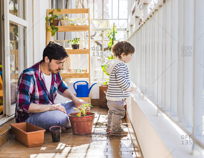 Father planting plant in pot by boy looking out while standing by railing at balcony