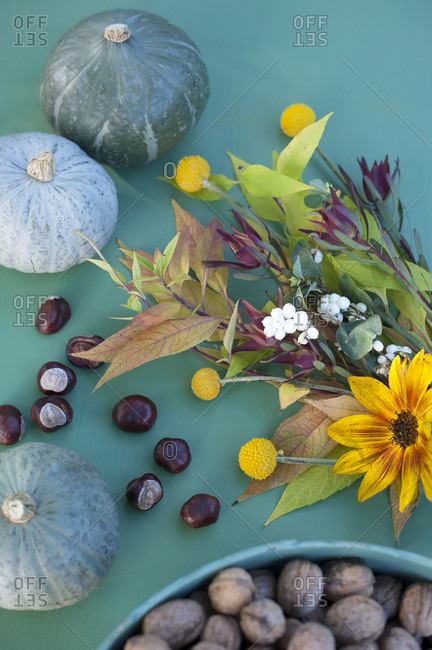 Autumn flora including nuts- pumpkins and flowers