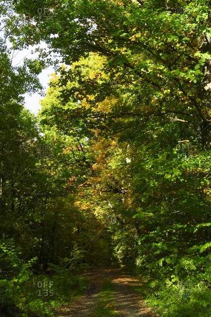 Malerweg trail in Elbe Sandstone Mountains