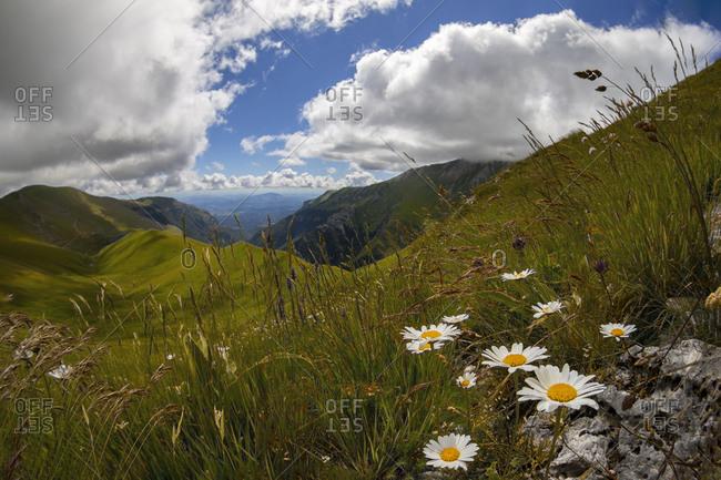 Summer meadow in Ambro Valley
