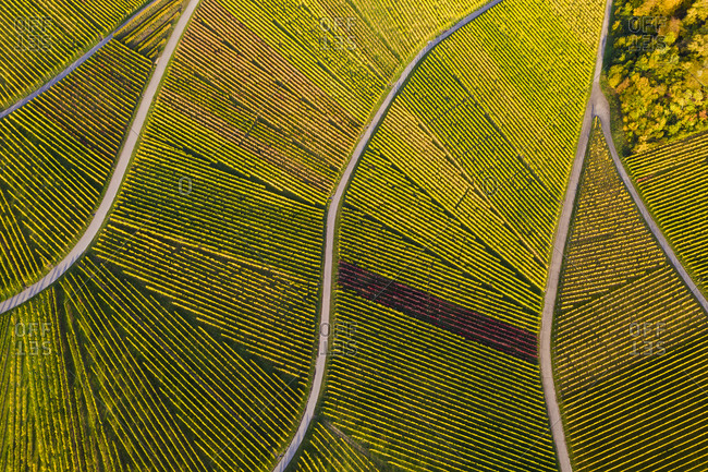 Aerial view of vast countryside vineyards in autumn