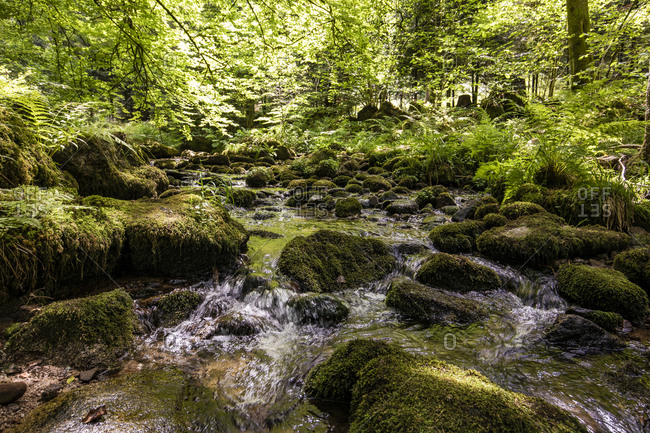 River Alb flowing between mossy rocks in Black Forest- Germany