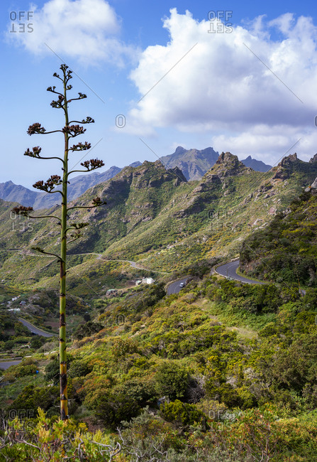 Winding road in forested Macizo de Anaga range