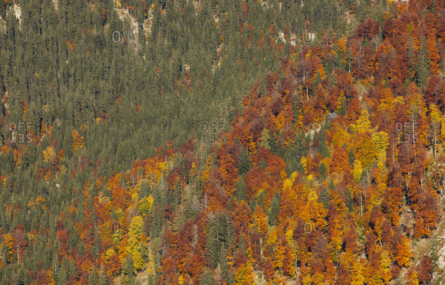 Aerial view of of green and orange trees during autumn- Altaussee- Salzkammergut- Styria- Austria