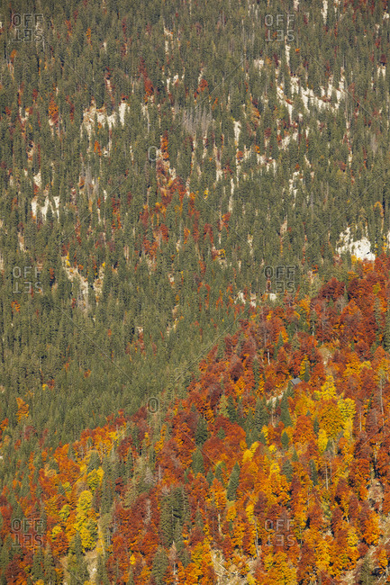 High angle view of green and orange trees during autumn- Altaussee- Salzkammergut- Styria- Austria