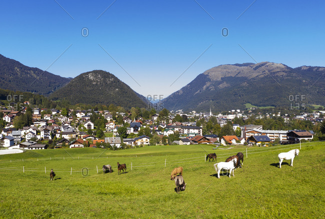 Herd of horse grazing on meadow by town against blue sky during sunny day- Salzkammergut- Austria