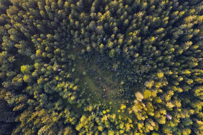 Aerial view of trees growing on Mondsee land during autumn- Salzkammergut- Austria