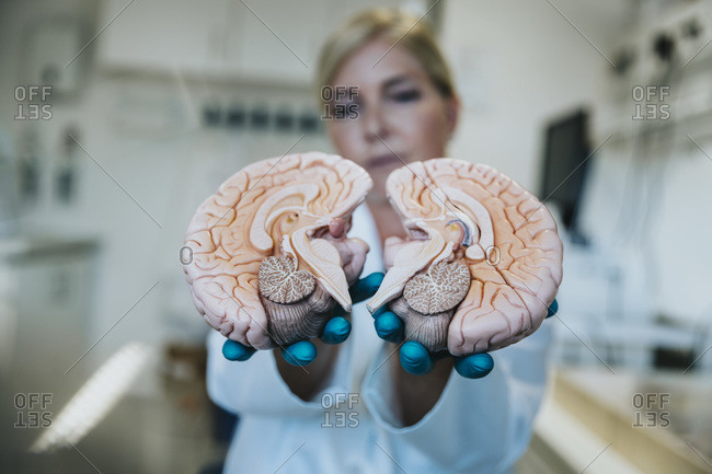 Scientist showing halves of artificial human brain part while standing at laboratory