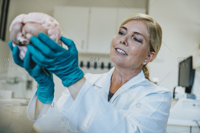 Smiling mature woman studying artificial human brain while working at laboratory