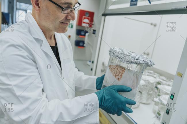 Scientist examining preserved human brain beaker while standing at laboratory