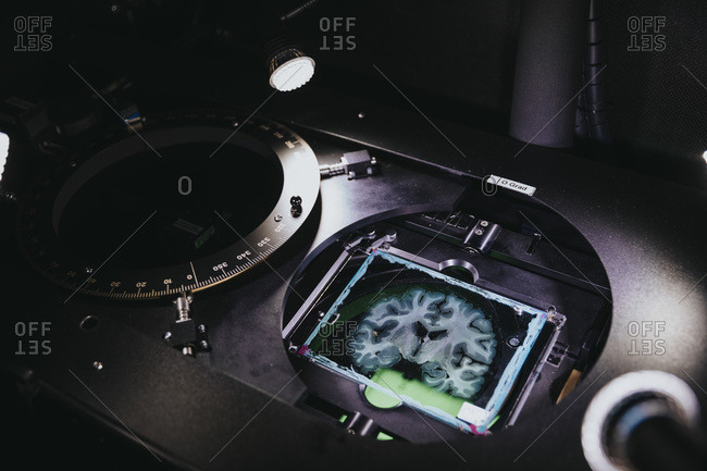 Human brain slide in advance microscope at laboratory