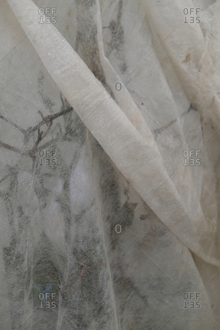 White cloth covering plant for protection against winter elements