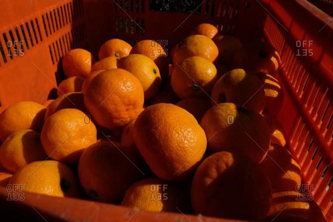 Orange basket filled with oranges