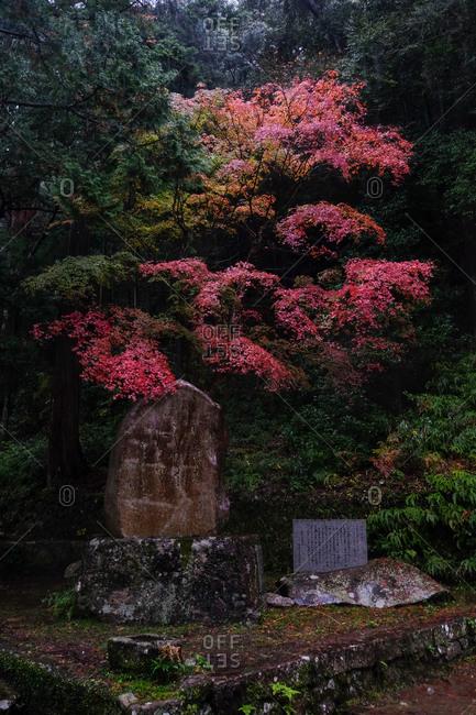 Wakayama, Japan - November 17, 2017: Stone with Japanese writing beneath colorful trees on a rainy autumn day