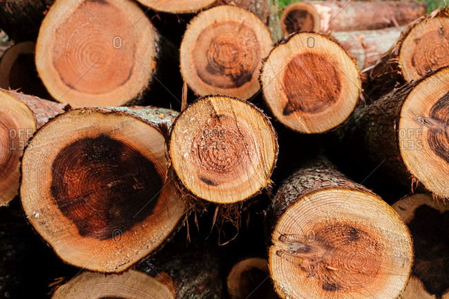 Stack of fresh cut tree logs close up
