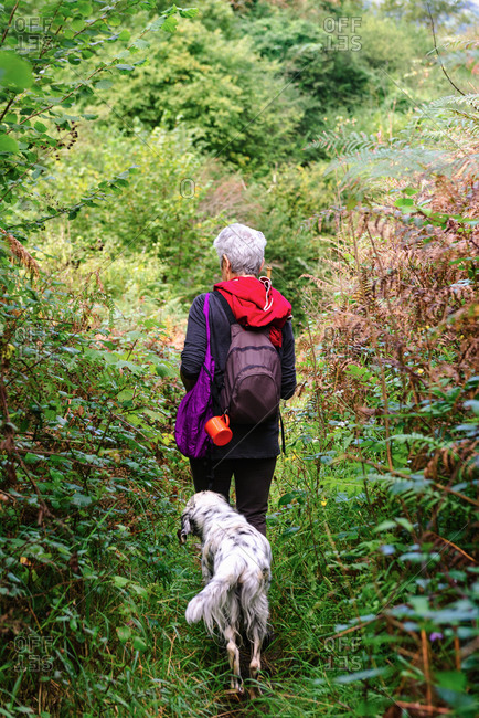 Back view of unrecognizable traveler with backpack and dog strolling on path between lush green trees in forest