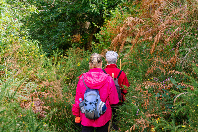 Back view of unrecognizable female elderly hikers with backpack while travelling together near greenery plants in Asturias