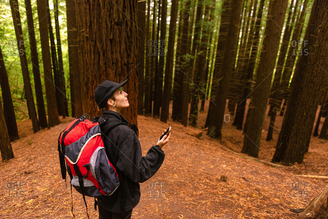 High angle side view of traveler with backpack standing in forest of Monte Cabezon Natural Monument of Sequoias while using smartphone and navigating on map