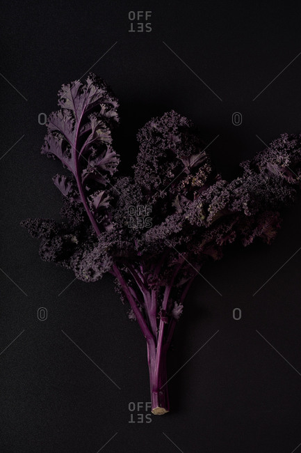 Purple kale on black background top view