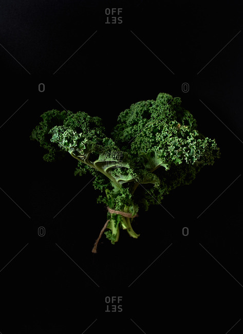 Green curvy kale on black background