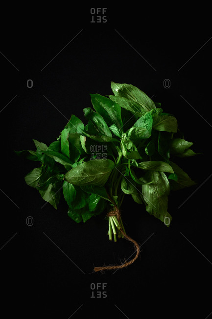 Closeup of a bunch of organic basil tied with twine on black background