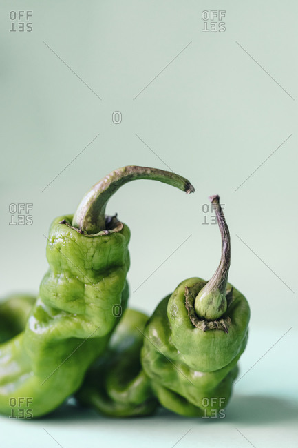 Closeup of dry green jalapeno peppers arranged on light blue background and showing concept of elderly wrinkled people