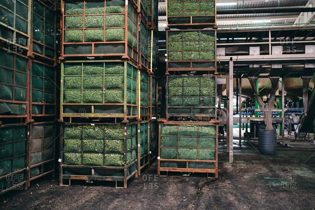 Boxes with fresh green plants placed in huge shabby warehouse in industrial area of factory