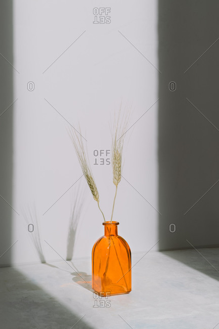 Orange glass vase with dried spiked plants placed on floor near wall in light room