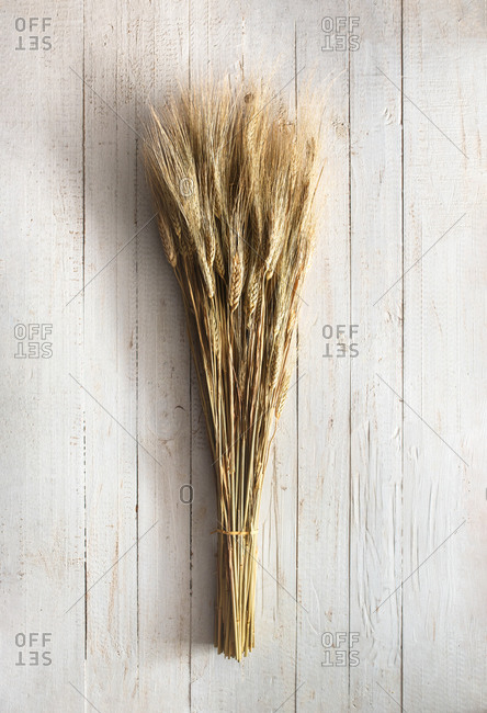 From above of bouquet of dried wheat spikes tied with rope placed on light wooden background