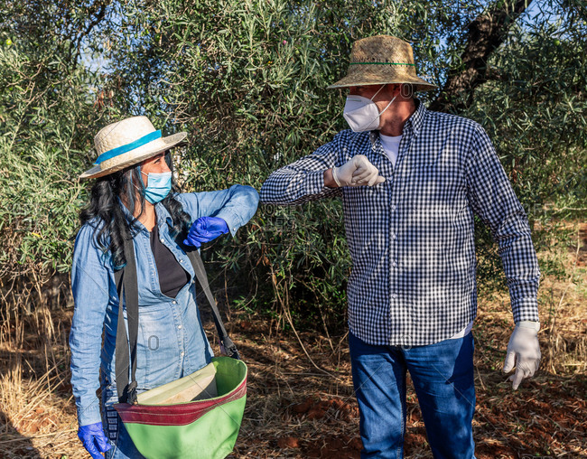 Farmers greeting each other by bumping elbows while preparing for harvesting season in garden during coronavirus pandemic