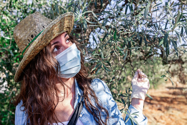 Curious female wearing straw hat and protective mask and gloves touching tree branches while working in farm