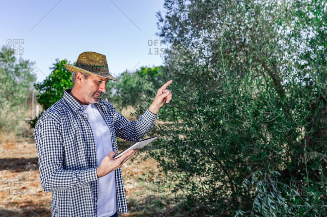 Confident middle age farmer using tablet while pointing at tree growing in green agricultural field