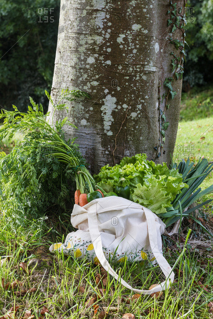 Eco friendly cotton shopping bag full of ripe carrots and lettuce placed on lawn near tree in nature showing concept of healthy food and diet