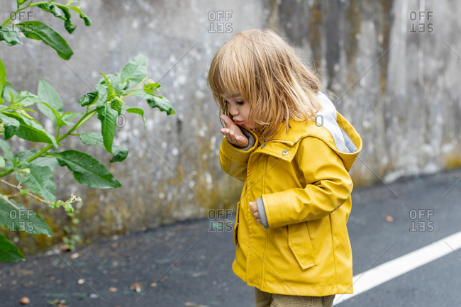 Side view of adorable little kid in bright yellow raincoat standing on wet street and playing with green plant after rain