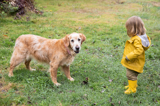 High angle side view of little kid in yellow raincoat playing with friendly fluffy dog on lawn in park