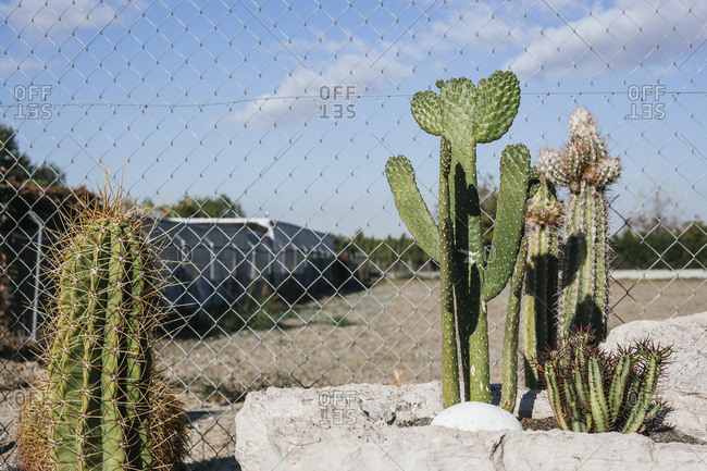 Assorted green cacti with thorns growing in yard on sunny day in dry climate