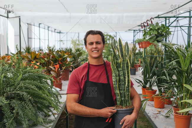 Happy male in tee shirt and apron looking at camera among plants in spacious greenhouse