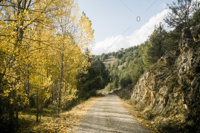 Empty asphalt road going through lush forest with colorful foliage in sunny autumn day in countryside