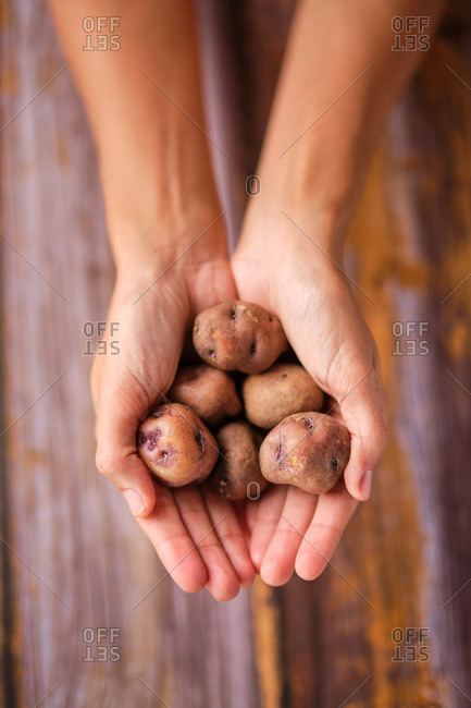 Top view of crop unrecognizable person demonstrating heap of uncooked potatoes with wrinkled peel above wooden table