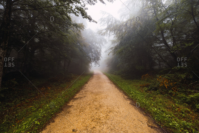 Empty shabby pathway between grass and growing trees in mist in windy weather in Spain