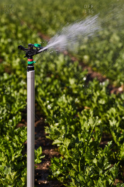 Modern irrigation system watering green plants growing on agricultural field in countryside on sunny day
