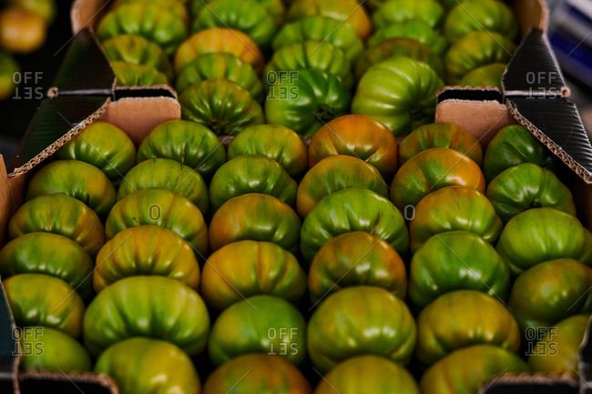 Delicious green tomatoes placed in rows in cardboard containers in local grocery market