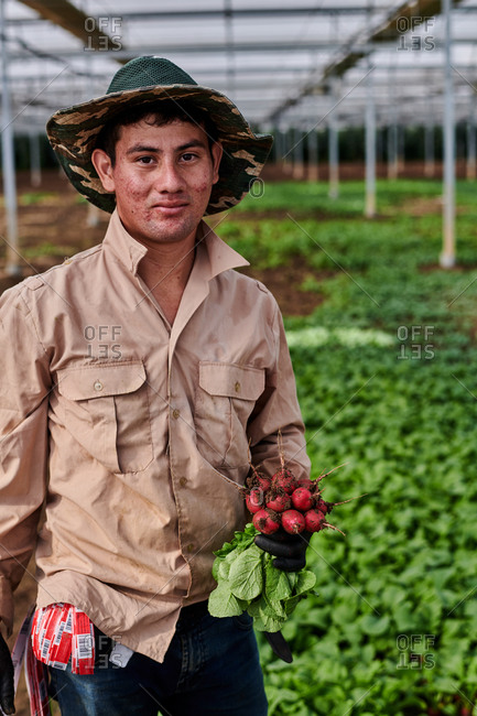 Cheerful male farmer standing in greenhouse with bunch of fresh delicious radish and looking at camera