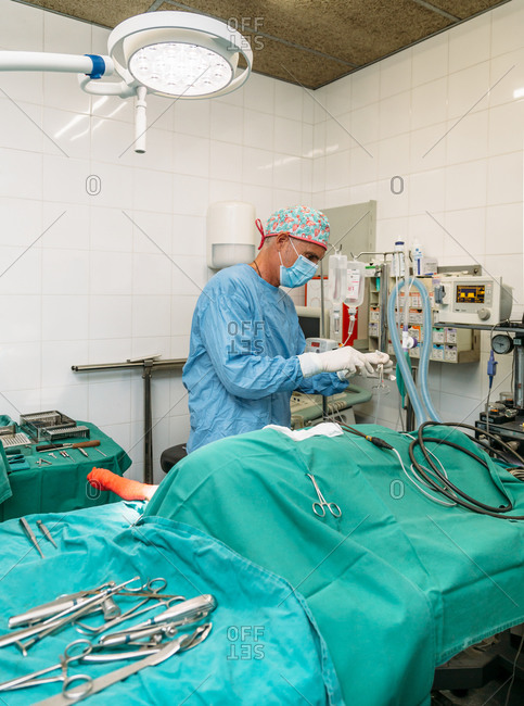 Veterinary surgeon performing a surgical procedure on a dog
