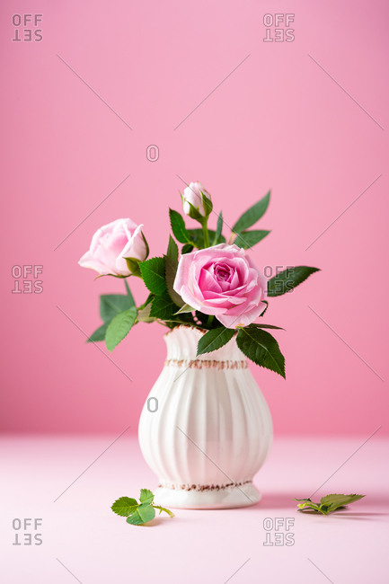 Blooming fresh pink roses in white vase