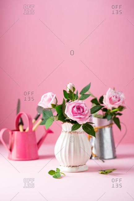 Blooming pink roses in white vintage vase
