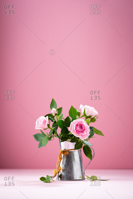 Pink roses in vintage tin watering can